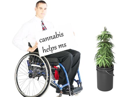 Cannabis improves MS