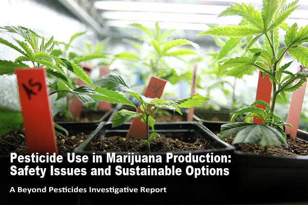 Pesticides Use in Cannabis Production